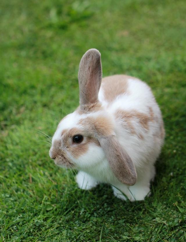 อาหารกระต่ายที่ดีที่สุด