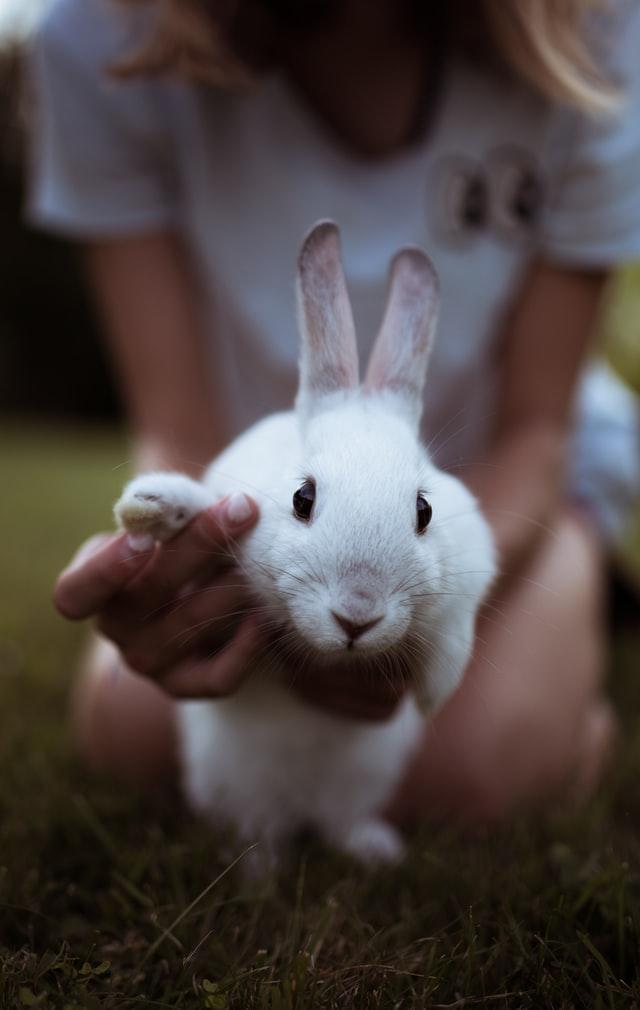 อาหารกระต่าย ราคาถูก